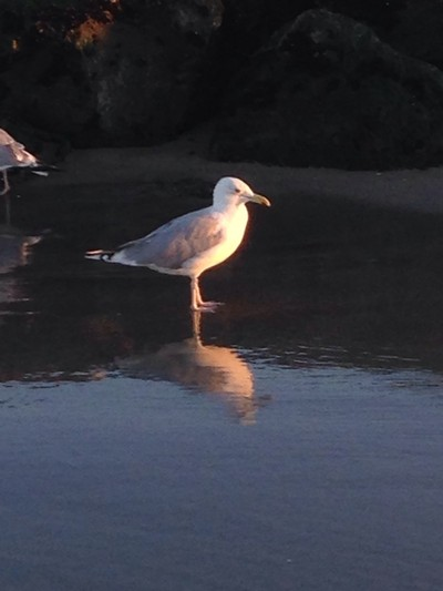 Sea gull Ocean Grove NJ