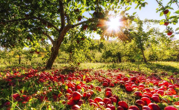 Forgotten Apples by philippegratton - Fall 2016 Photo Contest