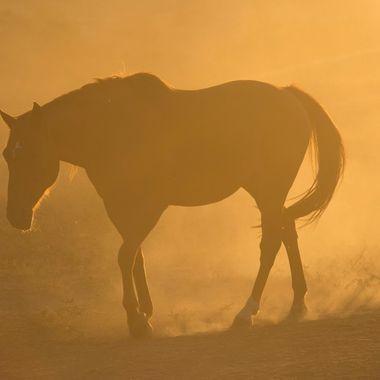 Sunrise Horse