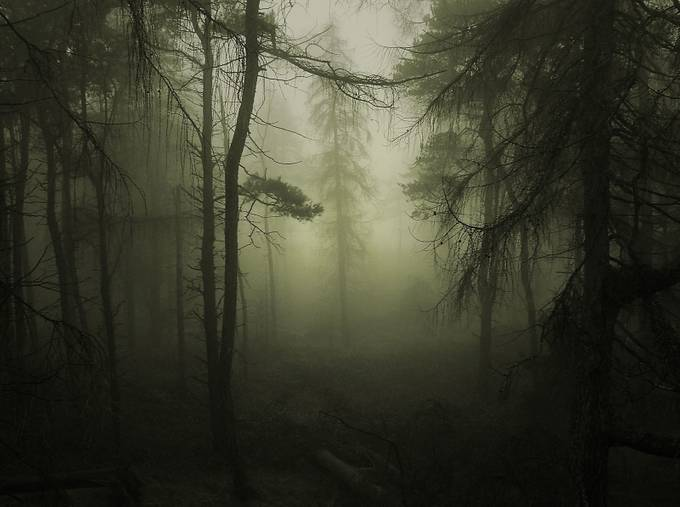 Creeping Mist by jules41 - Divine Forests Photo Contest