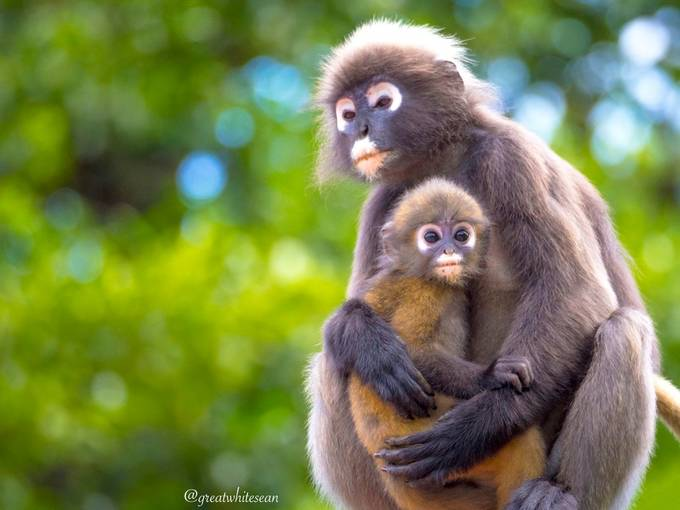 monkeys by Greatwhitesean - Monkeys And Apes Photo Contest