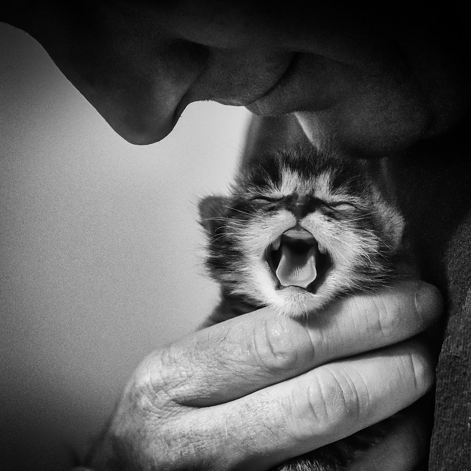 First Cries by lanatolle - People And Animals Photo Contest