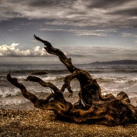 A tree log that reached the beach through a nearby stream, in Alimos, Athens, Greece.