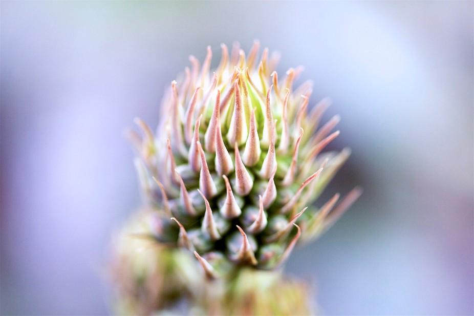 Plant - Crown detail 02