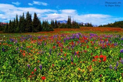 Alpine Flower Meadow!