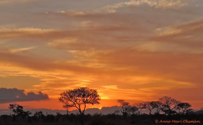 Painted sunset in Kruger