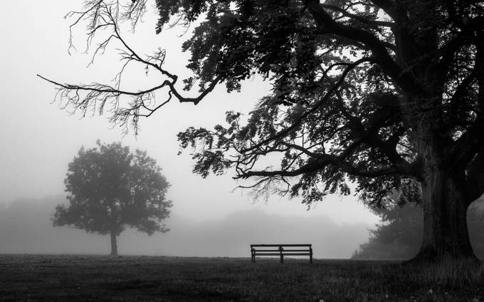 Misty Morning by ts446photo