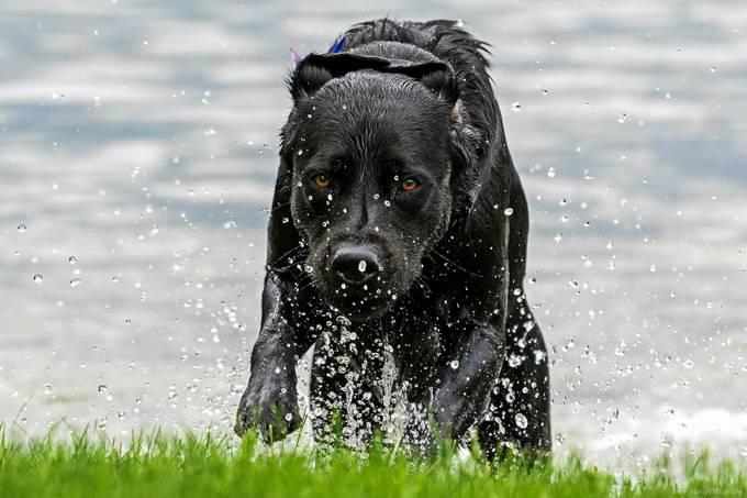 Splash by DavidMonty - Get Wet Photo Contest