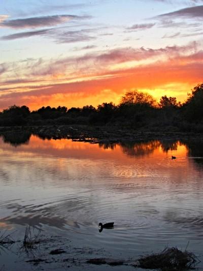 Serene Sunsets  #1 V.2