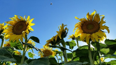 Glorious Afternoon To Bee