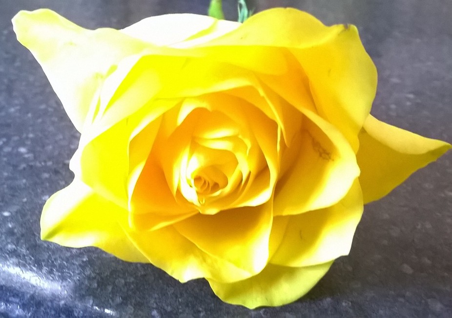 Bunch of flowers brought and I took this rose out for a photo x