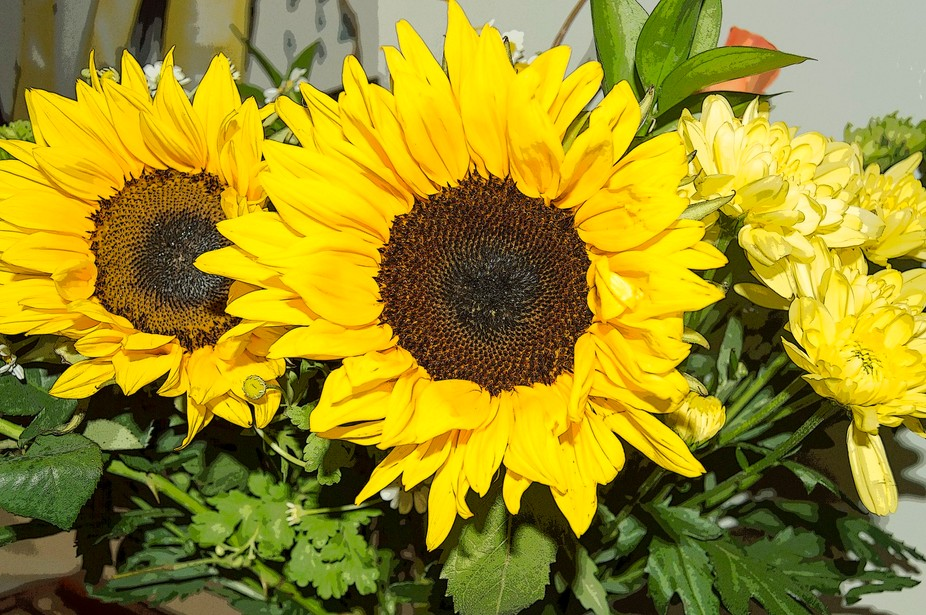 I love sunflowers and they were given to me by a special person
