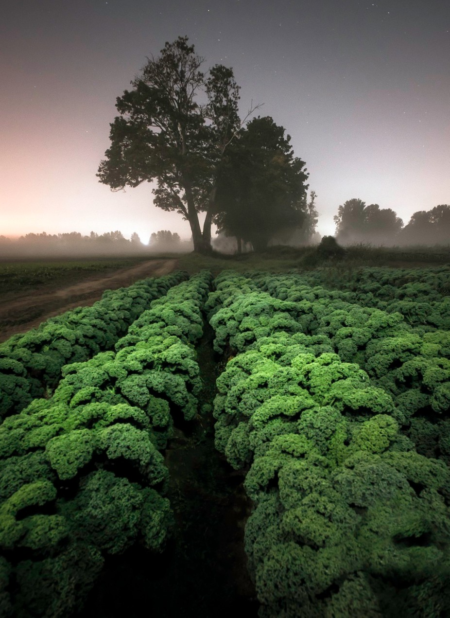 Kale by larryrogers - Composition And Leading Lines Photo Contest