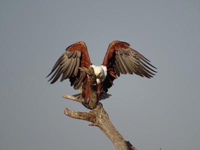 FishEagle Landing