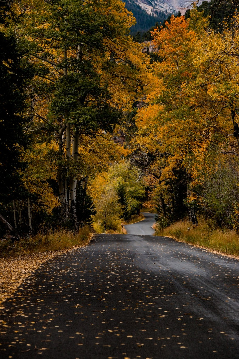 fall river road by caitw - A Road Trip Photo Contest