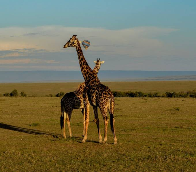 Balloon above Giraffes by staincliffe - Show Balloons Photo Contest