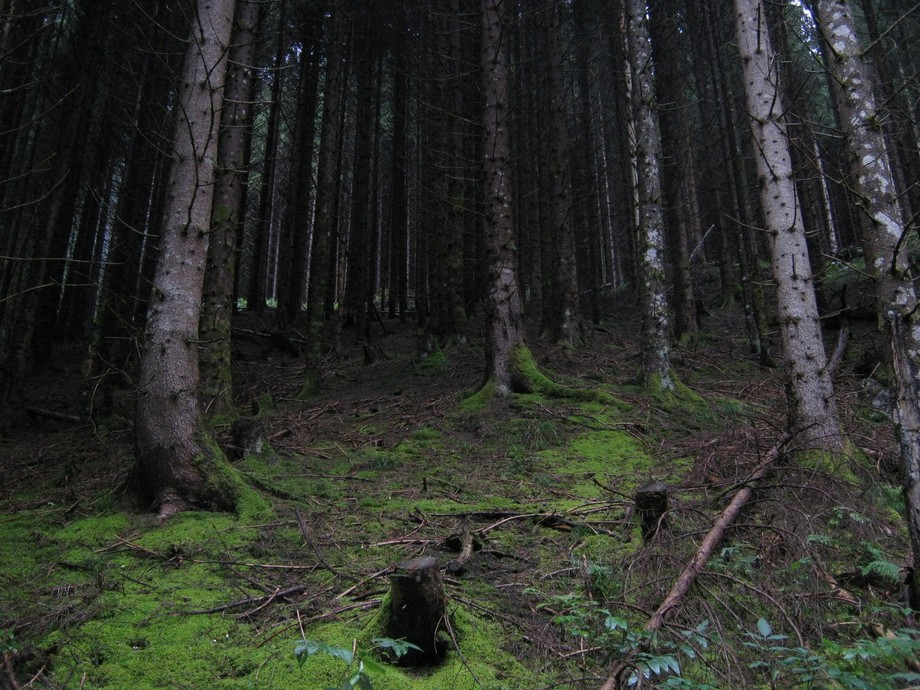 The Old Forest