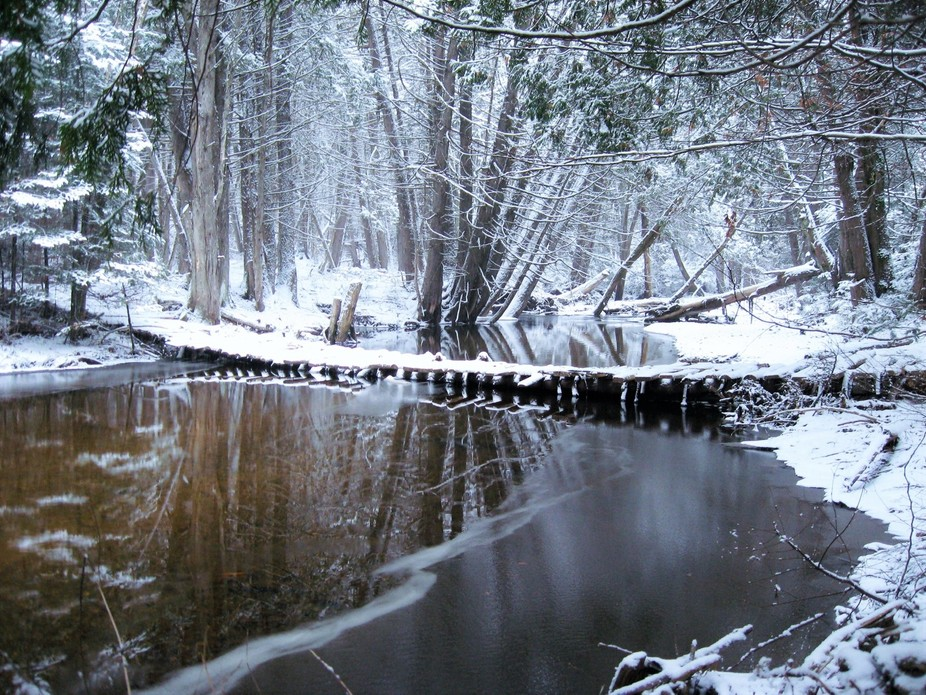 Behind my home there is this small brook with a wooden bridge.. I ran out just after our first sn...