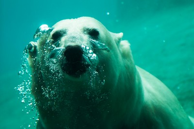 Bubbling Bear