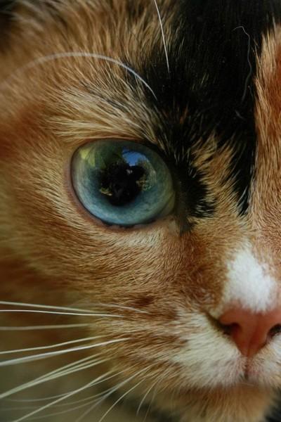 blue eyes pet