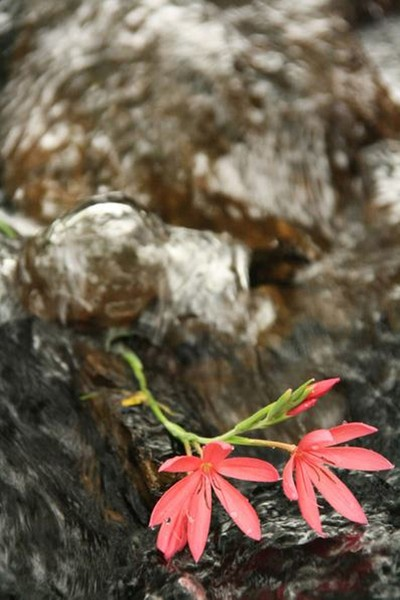 Flowing water and flower