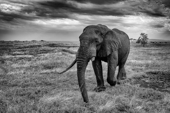 After the mud bath by JADUPONT - Black And White Wow Factor Photo Contest