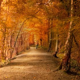 Autumn walks at Queenswood Country park Herefordshire