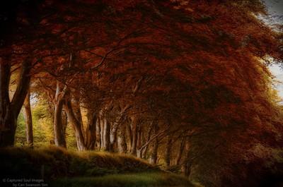 Autumn Trees in Strichen
