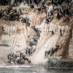 For 8 days near the Mara river it was only one so dramatic crossing from the high cliff...