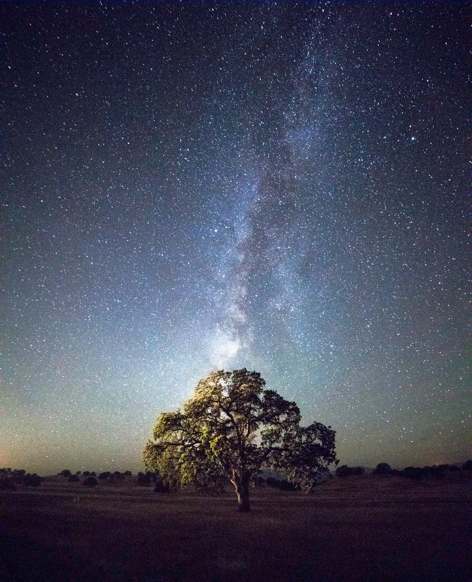 Milky Way and Tree by tcarpenter71 - The Milky Way Photo Contest