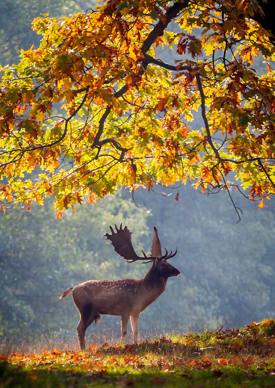 Stag  by GrahamF - Depth In Nature Photo Contest