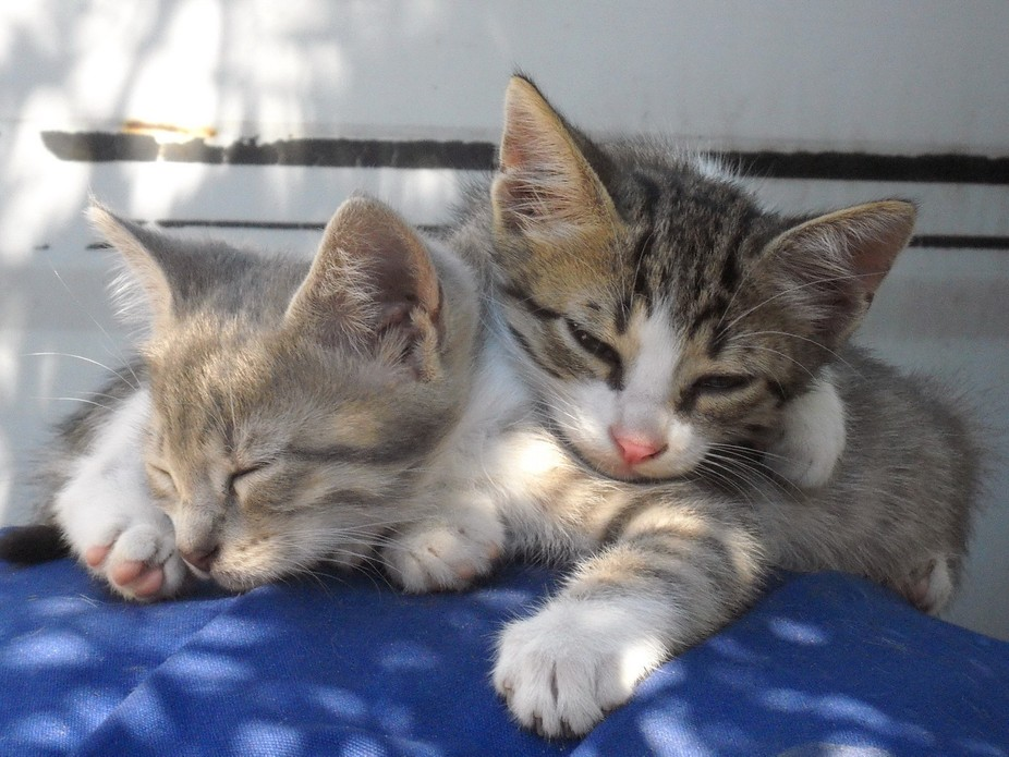 In the shadow of an olive tree. Greece. My holiday. Their nap. Idilic. A touch of sunlight on the...