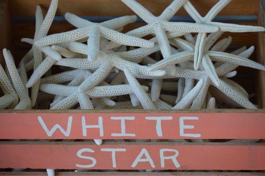 White Star Fish