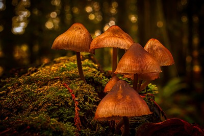 Wild mushrooms growing in the din of the forest canopy. by Theo-Herbots-Fotograaf