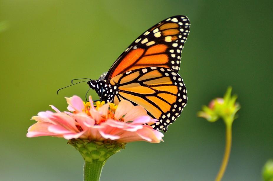 Monarch 10th 8DSC_0282_009