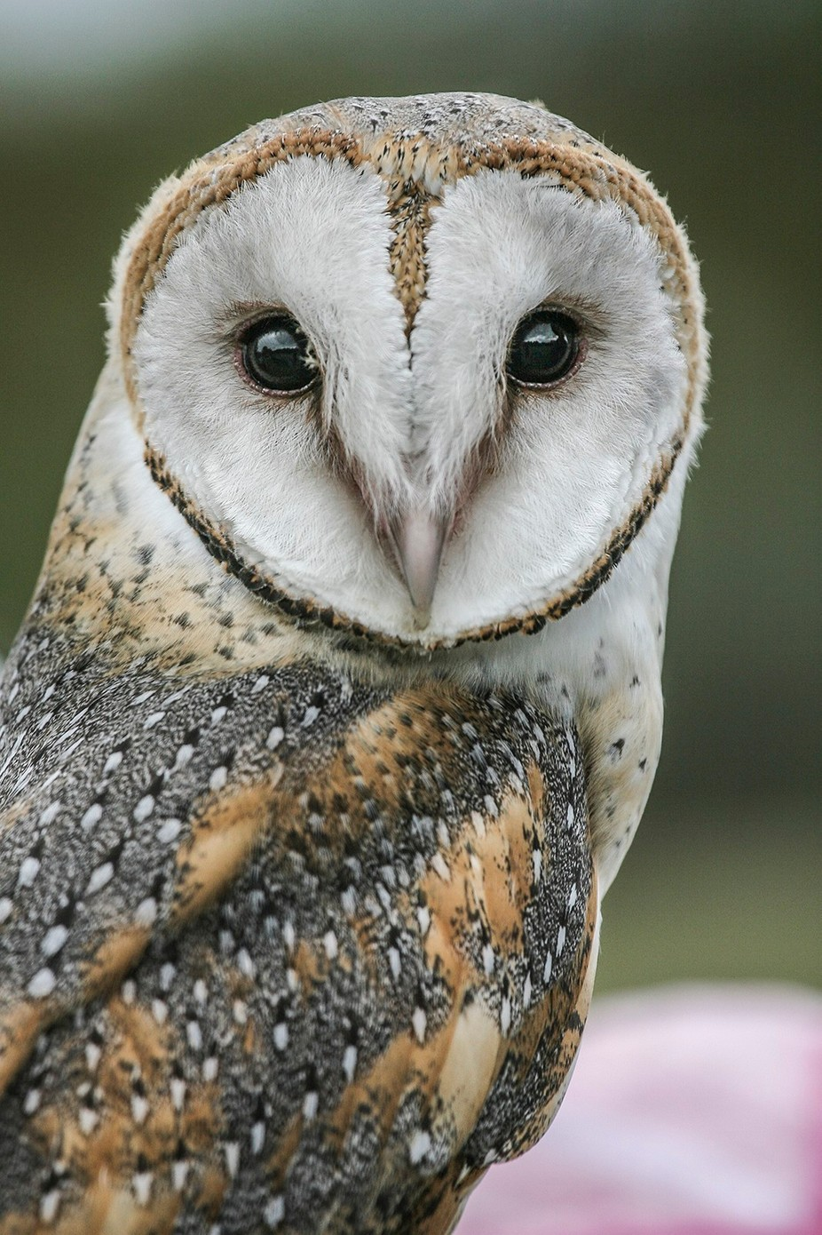 owl by susieromano - Beautiful Owls Photo Contest