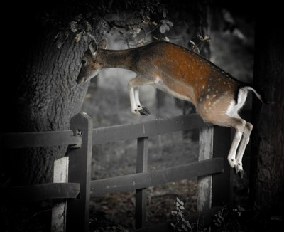 One deer a leaping!!