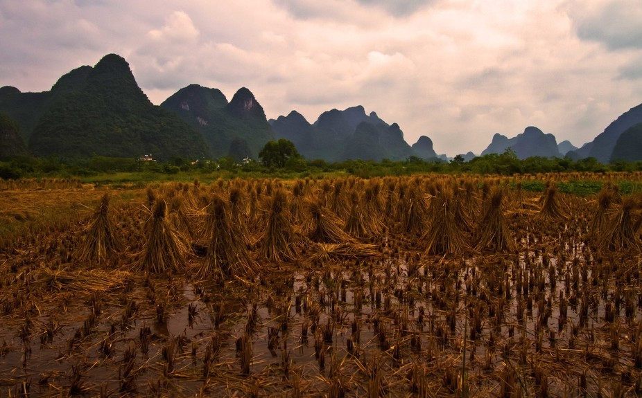 We were walking past these rice fields with the mountains in the background