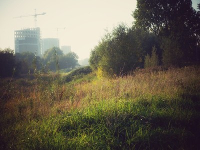 Nature in the city
