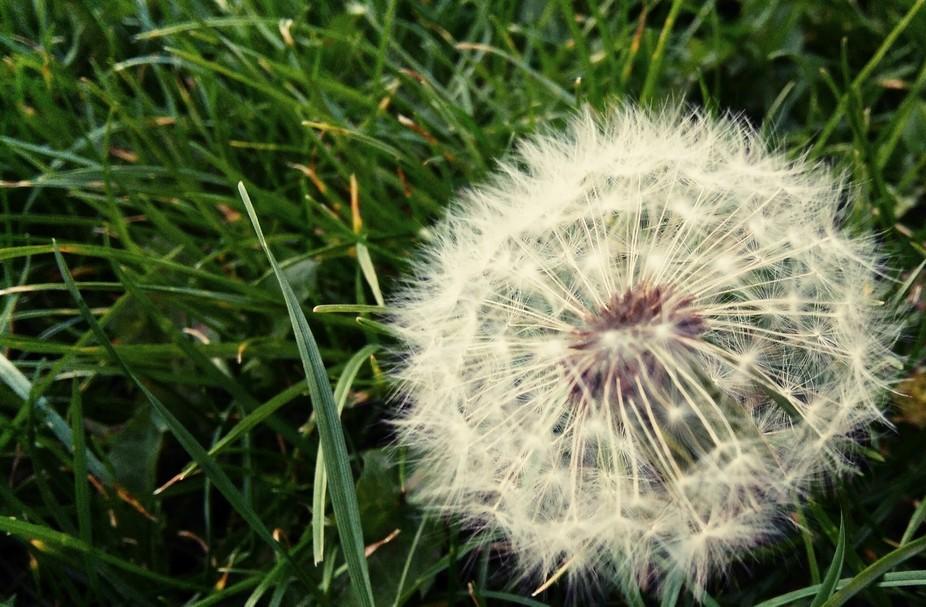 A Sharp wish