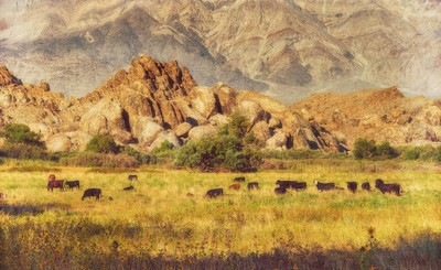 Lone Pine Cows