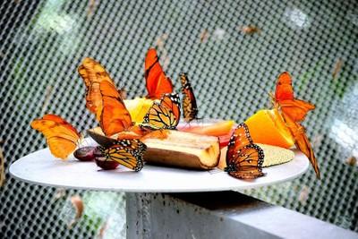 Monarchs & Friends