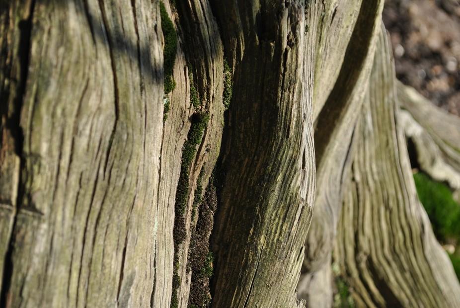 black park dead wood