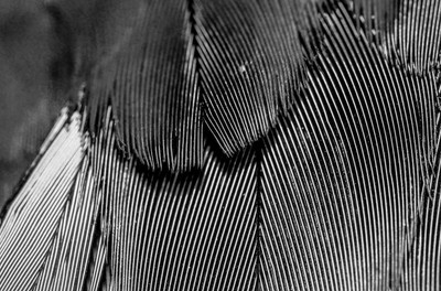 Abstract Feathers BW
