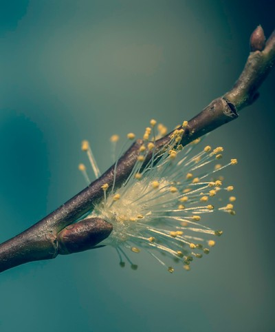 Natures Simplicity