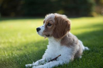 Just a Puppy