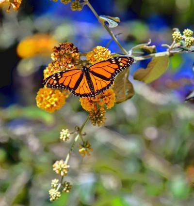 Butterflies By The Sea
