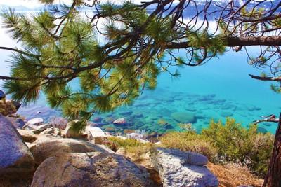 Lake Tahoe Window Framed by a Ponderosa Pine tree limb