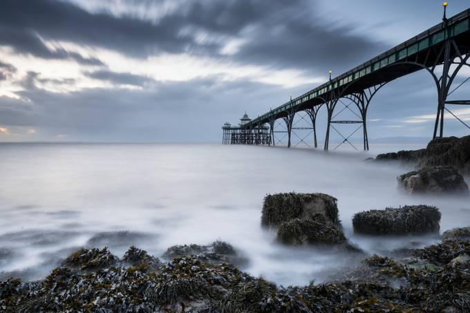 Seaweed by GaryClark
