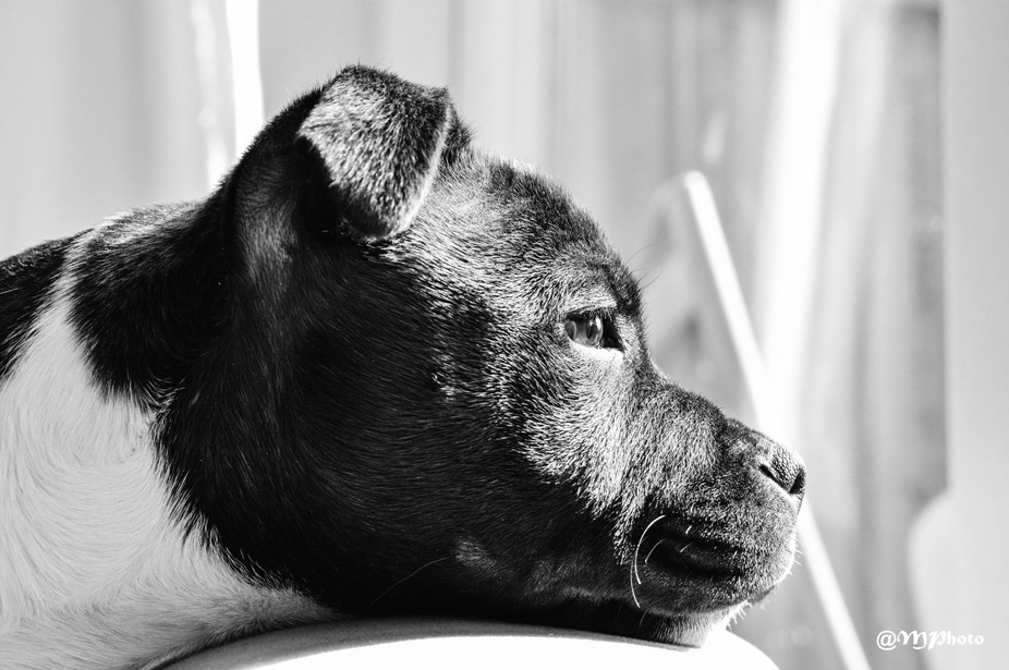 My girl Abby in Black& White